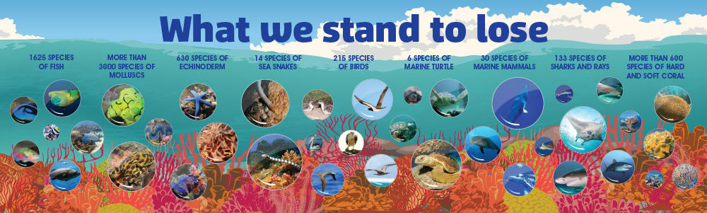 Great Barrier Reef Wall Graphics 2
